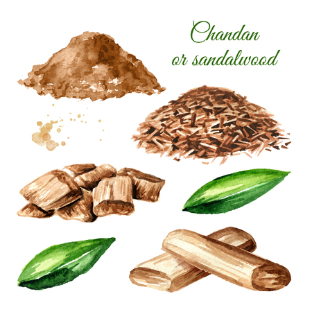 Sandalwood or Chandan Set. Sticks, shavings, powder and leaves. Watercolor hand drawn illustration isolated on white background