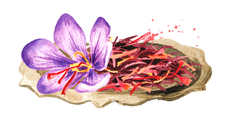 Dried saffron spice and a flower on the plate. Watercolor hand drawn illustration, isolated on white background