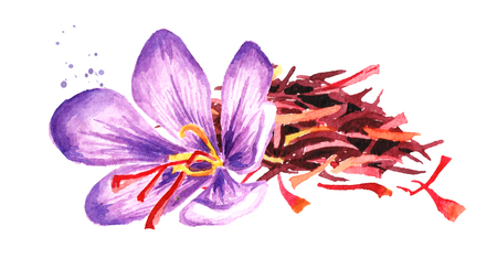 Heap of dried saffron thread with a flower. Watercolor hand drawn illustration,  isolated on white background Фото со стока