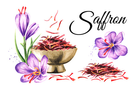 Saffron card. Watercolor hand drawn illustration,  isolated on white background Фото со стока