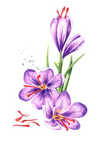 Fiori di zafferano con fili. Illustrazione disegnata a mano dell'acquerello, isolata su fondo bianco