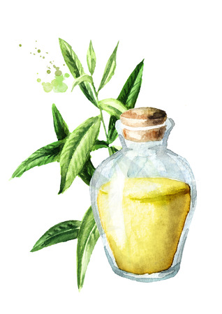 Lemon verbena essential oil. Watercolor hand drawn illustration isolated on white background