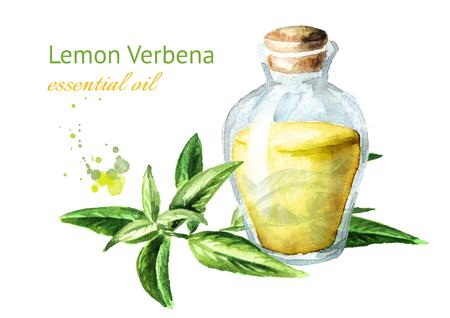 Olio essenziale di verbena limone. Illustrazione disegnata a mano dell'acquerello, isolata su fondo bianco