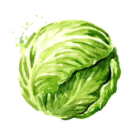 Head of fresh cabbage.