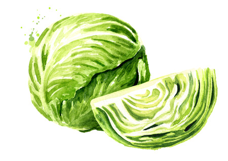 Whole cabbage with cut