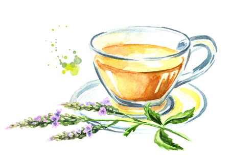 Medicinal plant Verbena tea. Watercolor hand drawn illustration, isolated on white background
