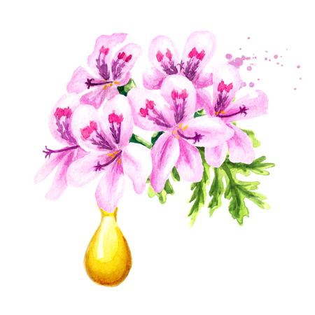 Pelargonium graveolens or Pelargonium x asperum, geranium flower and essential oil drop. Watercolor hand drawn illustration,  isolated on white background Stock Photo