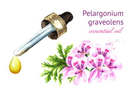 Pelargonium graveolens or Pelargonium x asperum, geranium flower and essential oil drop. Watercolor hand drawn illustration, isolated on white background 写真素材