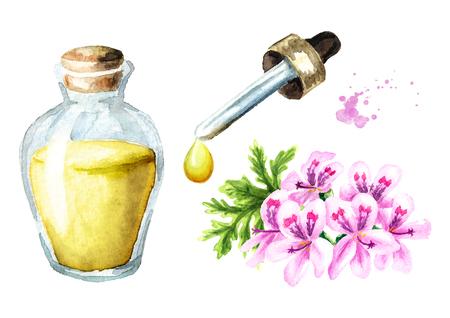 Pelargonium graveolens or Pelargonium x asperum, geranium flower and essential oil set. Watercolor hand drawn illustration, isolated on white background