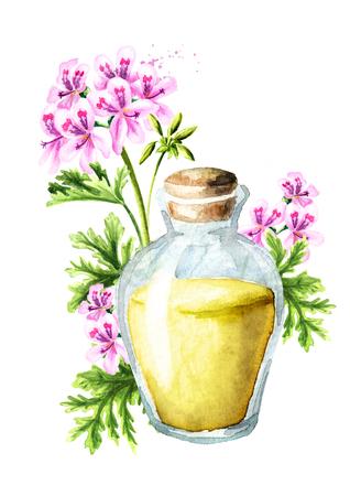 Pelargonium graveolens or Pelargonium x asperum, geranium flower and essential oil. Watercolor hand drawn illustration isolated on white background