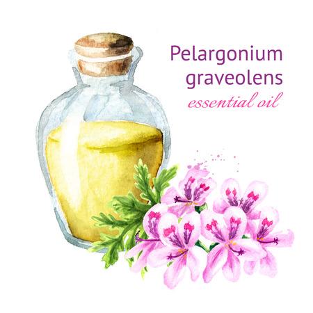 Pelargonium graveolens or Pelargonium x asperum, geranium flower and essential oil. Watercolor hand drawn illustration, isolated on white background