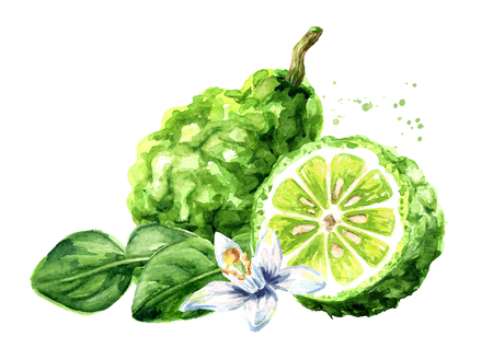 Fresh bergamot fruit with leaf and flower. Watercolor hand drawn illustration, isolated on white background Standard-Bild - 124397973