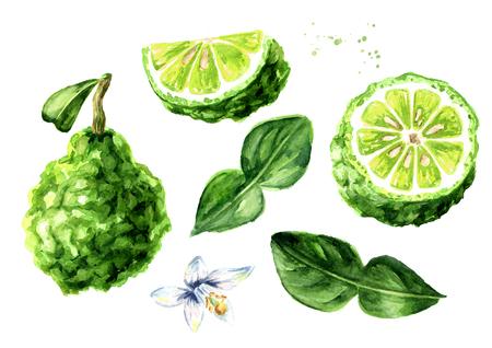 Fresh bergamot fruit with leaf set. Graphic design elements. Watercolor hand drawn illustration, isolated on white background Standard-Bild - 124397975