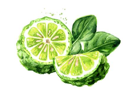 Fresh bergamot fruit with leaf. Watercolor hand drawn illustration, isolated on white background Standard-Bild - 124397976
