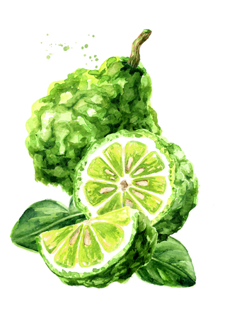 Fresh bergamot fruit with leaves. Watercolor hand drawn illustration, isolated on white background