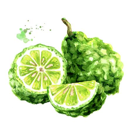 Fresh bergamot fruit. Watercolor hand drawn illustration, isolated on white background Standard-Bild - 124398016