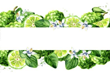 Fresh bergamot horizontal background. Watercolor hand drawn illustration isolated on white background Standard-Bild - 124398021