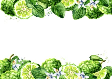 Fresh bergamot horizontal background. Watercolor hand drawn illustration, isolated on white background Standard-Bild - 124398022