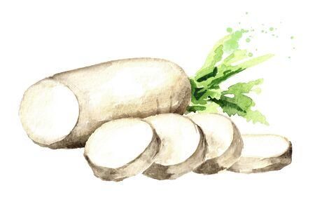 Daikon radish root with slices. Standard-Bild - 124751135