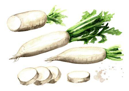 Daikon radish root.
