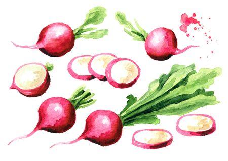 Small garden fresh red radish set. Standard-Bild - 124751140
