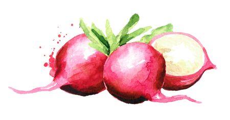 Small garden fresh red radish Standard-Bild - 124751142
