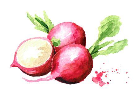 Small garden fresh red radish. Standard-Bild - 124751141