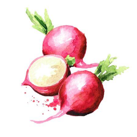 Small garden red radish Standard-Bild - 124751146
