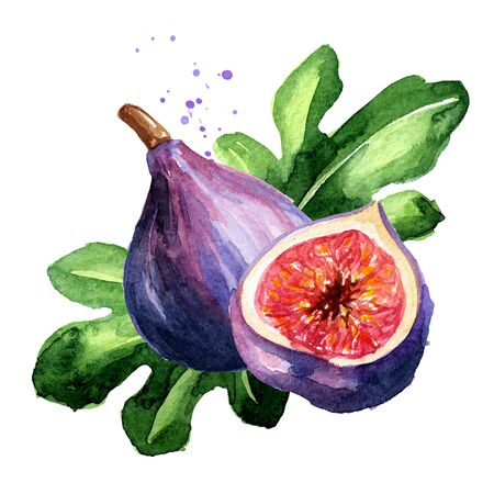 Fresh ripe purple fig fruit and leaves on a branch.