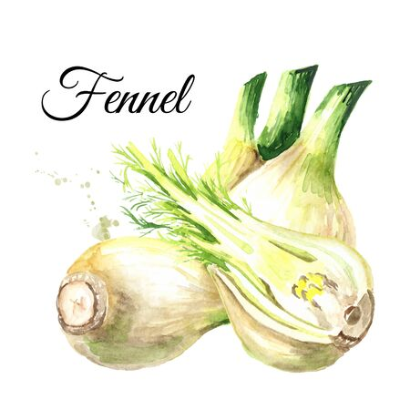 Fresh fennel bulbs Stok Fotoğraf - 126825592