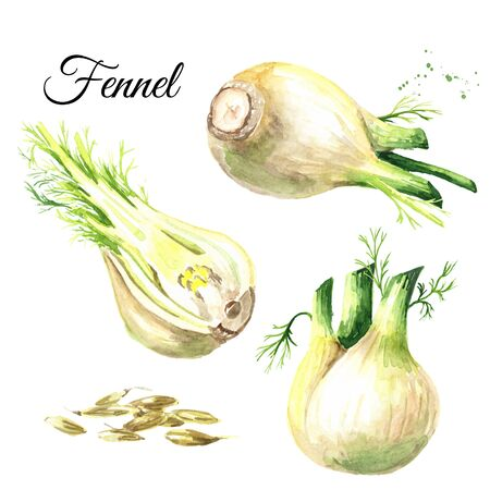 Fresh fennel bulbs with leaves and seeds set.