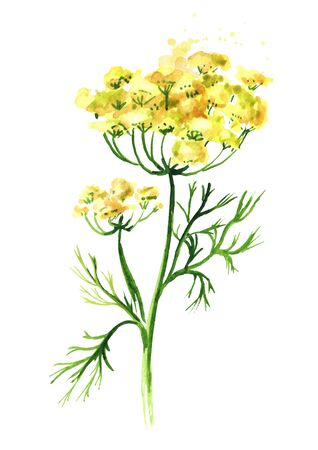 Fresh fennel flower.