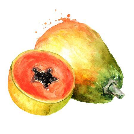 Whole and half of sweet ripe papaya fruit. Watercolor hand drawn illustration isolated on white background