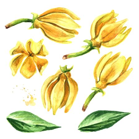 Ylang-Ylang set on white Zdjęcie Seryjne