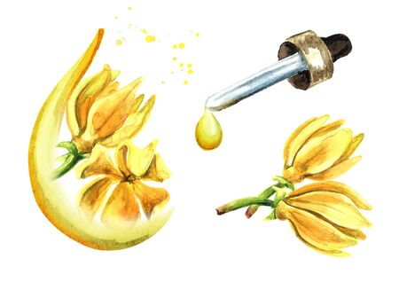 Ylang-Ylang yellow flower. Cananga odroata essential oil set, Spa and aromatherapy