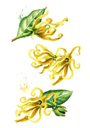 Ylang-Ylang yellow flower set.