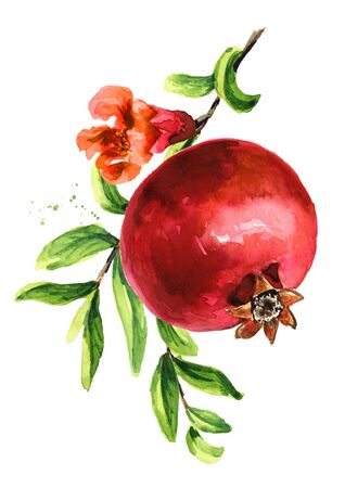 Fresh  ripe pomegranate fruit on the branch.