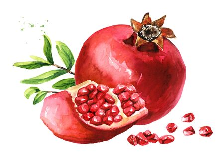 Pomegranate fruit Watercolor hand drawn  isolated on white