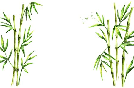 Green bamboo stems and leaves Zdjęcie Seryjne - 131570769