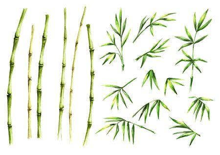 Green bamboo stems and leaves Zdjęcie Seryjne