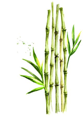 Green bamboo stems and leaves Standard-Bild
