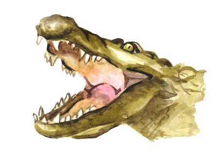 Muzzle or head of a crocodile or Alligator with open mouth. Watercolor hand drawn illustration, isolated on white background