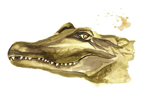 The smiling muzzle or head of a crocodile or Alligator. Watercolor hand drawn illustration, isolated on white background