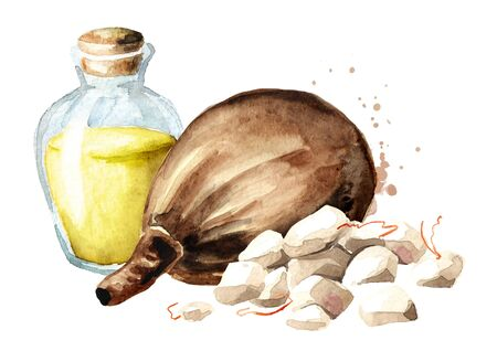 Baobab fruit with dried pulp and oil. Watercolor hand drawn illustration, isolated on white background Zdjęcie Seryjne