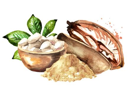 Baobab fruit with dried pulp and powder. Superfood. Watercolor hand drawn illustration isolated on white background Zdjęcie Seryjne