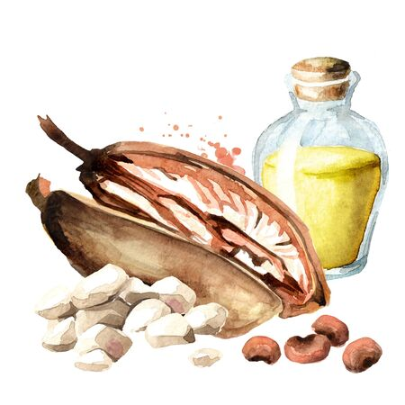 Baobab fruit with pulp, seeds and oil. Watercolor hand drawn illustration, isolated on white background