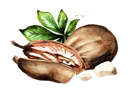 Baobab fruit, Superfood. Watercolor hand drawn illustration, isolated on white background Zdjęcie Seryjne