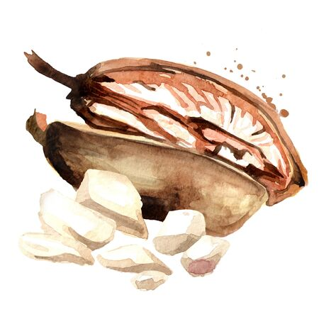 Split Baobab fruit with dried pulp. Superfood. Watercolor hand drawn illustration, isolated on white background