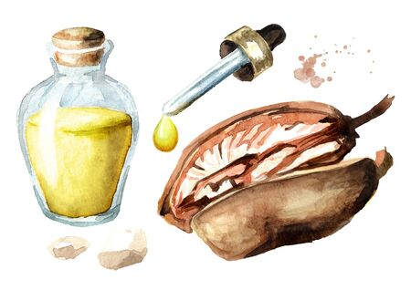 Baobab fruit and essential oil drop and glass bottle.