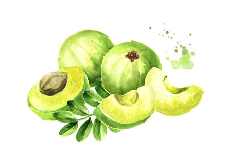 Amla green fruits with leaves